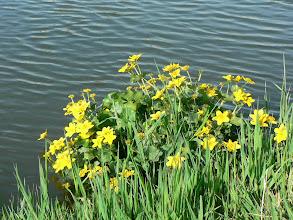 Photo: Le printemps apporte des touches fleuries