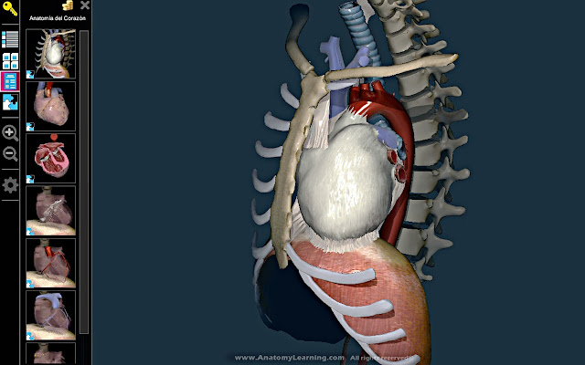3D Anatomy Learning - Chrome Web Store