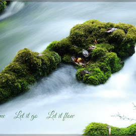 Go With the Flow by Tammy Drombolis - Typography Captioned Photos ( ispiration, full cup, river, green', water,  )