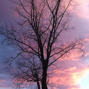 Sunset tree by Iztok Conic - Landscapes Sunsets & Sunrises