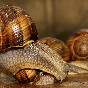 fight by Mihai Cristian - Animals Other ( snails, calm, desire, speed, green, slow motion, run, deep )
