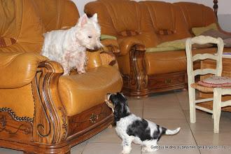 Photo: Gribouille des aubépines de La.Vilco (Feel Gold & Jude)