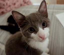 Photo: Enough with the kitten photos