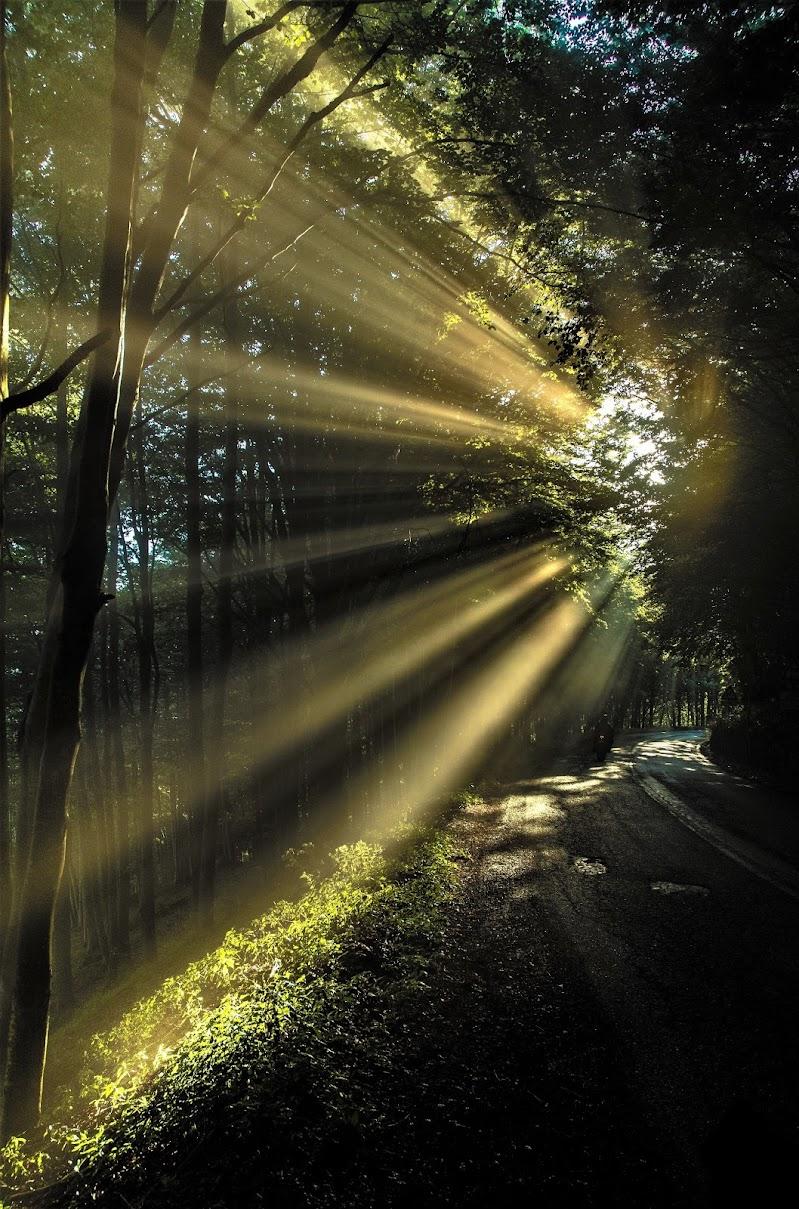 Luce tra i rami di simone_dagostino