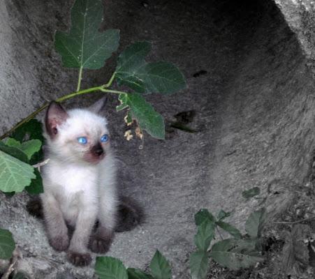 Occhi azzurri in cerca di una casa di roxelle