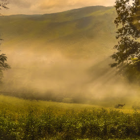 Cades Cove Composite by Chris Thomas - Landscapes Prairies, Meadows & Fields ( light painting, forest, landscapes, landscape, cades cove, composite, deer )