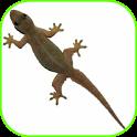 Lizard Fall icon