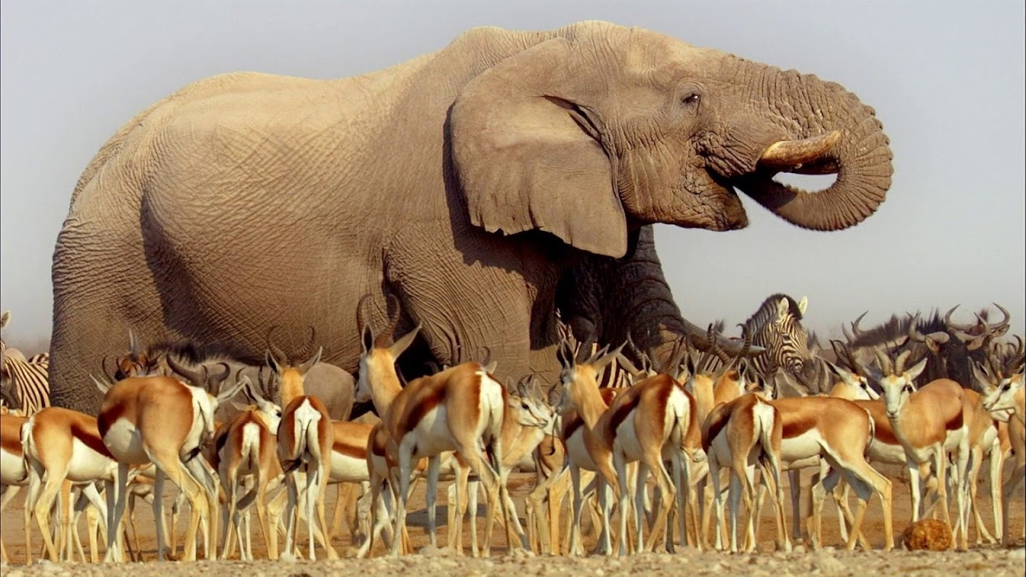 Watch Planet Earth: Africa live