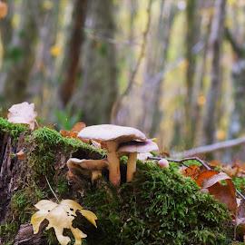 Autumn in woods by Slaven Bandur - Nature Up Close Mushrooms & Fungi ( mushrooms, moss, foliage, green, leaves, fungi, nature, natural light, woods, nature up close, autumn, trees )