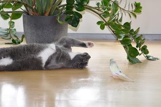 Photo: Siin Karla kiusab kassi ja kass mõnuleb...
