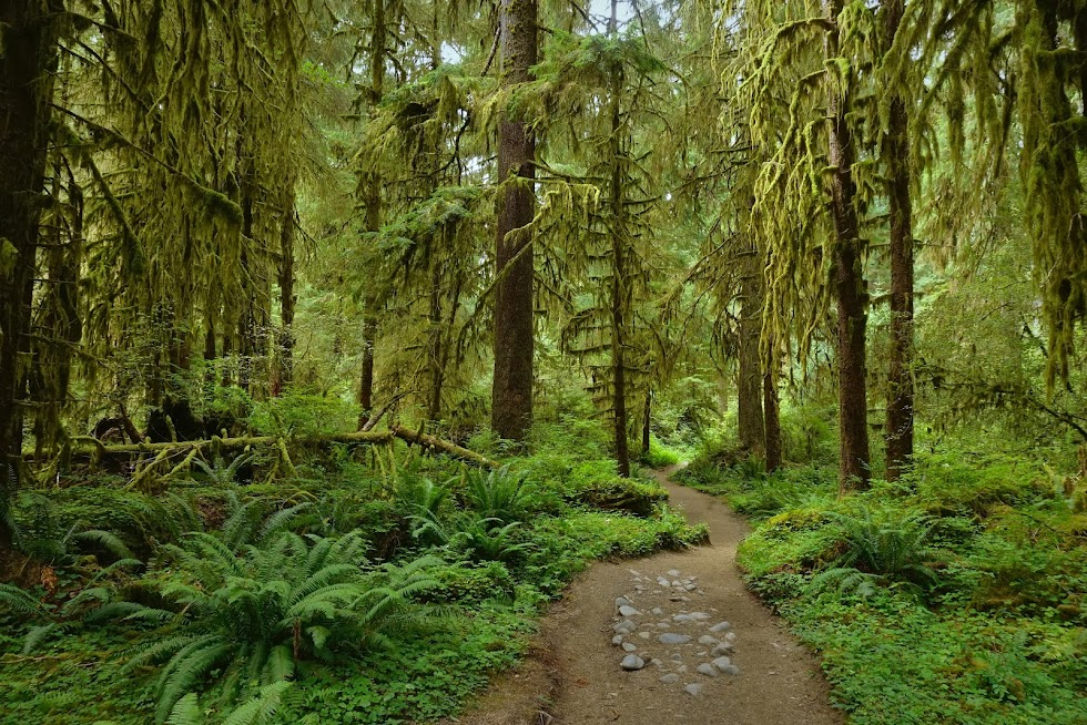 A walk through the enchanted Hoh Rainforest - Olympic National Park, Washington