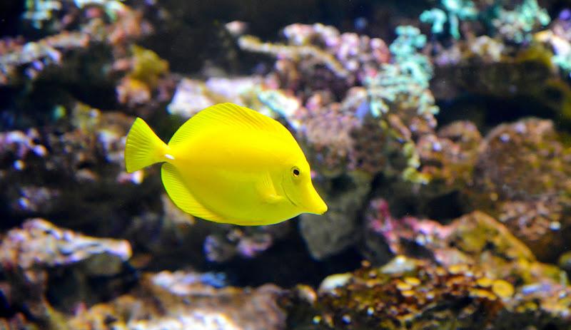 il pesciolino solitario  di alfi