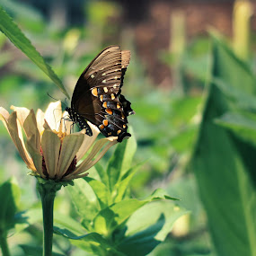 by Stephanie Munguia-Wharry - Novices Only Flowers & Plants ( butterfly )