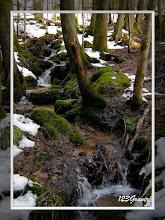 Photo: En forêt de Rimbach