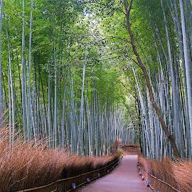 Bamboo Grove by Kwoh LK - City,  Street & Park  City Parks ( bamboo grove, arashiyama )