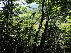左に林道が見える