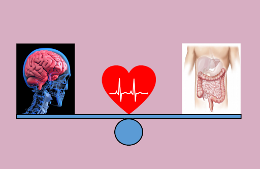 Un cœur, deux cerveaux (mental et cerveau des émotions)