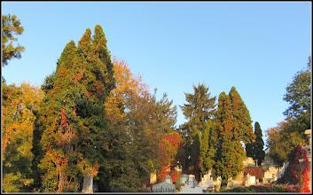 Photo: Conifere  din Turda,  Cimitirul Central - 2018.10.11