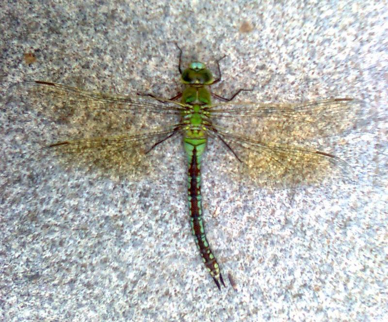 kind of fly di Praz