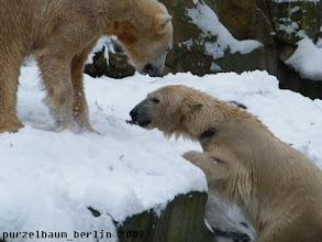 Photo: Gianna, die Kletterkuenstlerin - Knut staunt ;-)