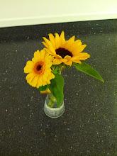 Photo: Gerbera (nebo germína, nikdy nepoznám) pro B. k svátku ze sobotní oslavy, slunečnice zkrácená na vázičkovou velikost z nedělní návštěvy Haničky!