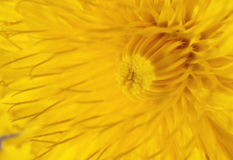 Flower's heart di viola94