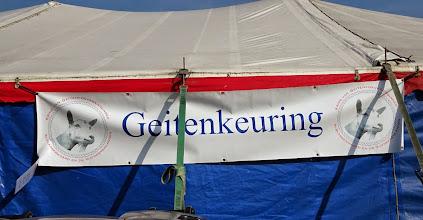 Photo: Fokveedag Hoornaar 4 oktober 2014 met keuringen, presentaties en demonstraties. Meerdere schapen- en geitenrassen worden in de tent aan het publiek getoond.