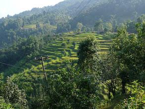 Photo: Les belles cultures en terrasse du pays gurung, fruit d'un travail acharné depuis des siècles