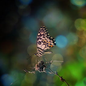 .NT. by Anton Wahyudi - Animals Insects & Spiders