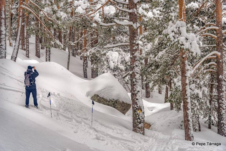 La imagen puede contener: nieve, árbol, exterior y naturaleza