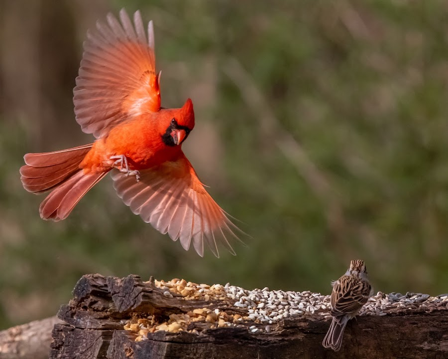 Clear For Landing! by Mike Craig - Animals Birds