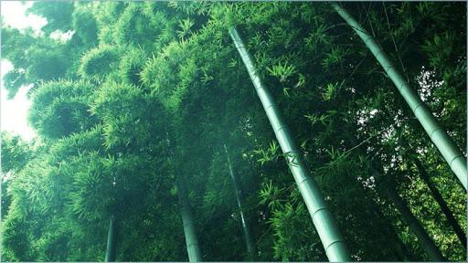 免費下載娛樂APP|竹の壁紙 app開箱文|APP開箱王