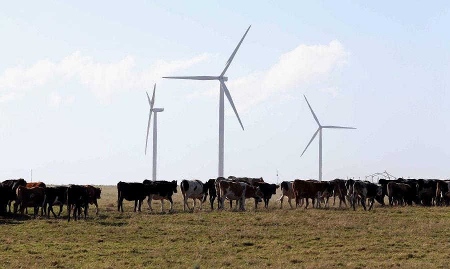 Kouga Wind Farm generates multiple benefits for investors ...