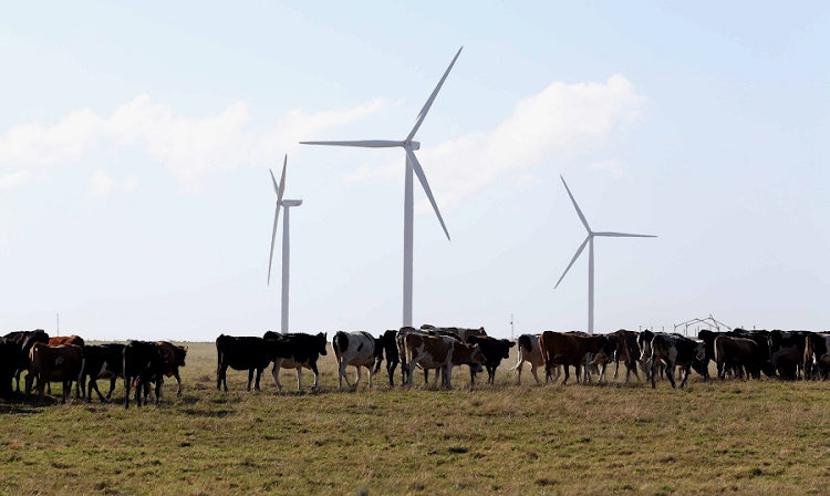 Wind turbines at Kouga Wind Farm at Oyster Bay in the Eastern Cape. File picture: SUNDAY TIMES