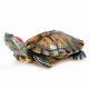 Download Красноухая черепаха. Уход и содержание For PC Windows and Mac