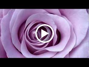 Video: A. Vivaldi  Concerto for flute, strings   b.c. in E minor (RV 431) - [incomplete] -