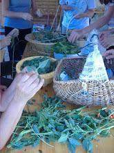 Photo: si procede con la cura delle erbe