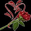 Red Shine Rose LWP