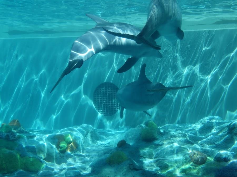 by Robin Davis - Animals Sea Creatures ( #GARYFONGDRAMATICLIGHT, #WTFBOBDAVIS,  )