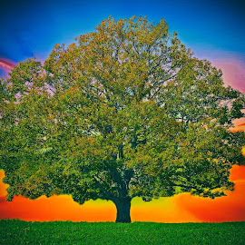 Colorful by Bill Diller - Digital Art Things ( michigan, lone tree, nature, sunset, tree, farm field, colorful, colors, digital art )