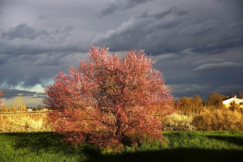 Giorno di primavera  di paolo_battilani