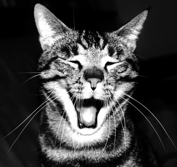 Allegria felina di ciocia95