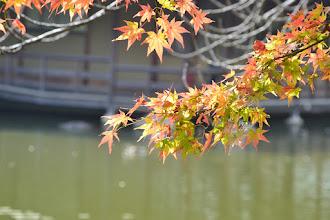 Photo: 中新七