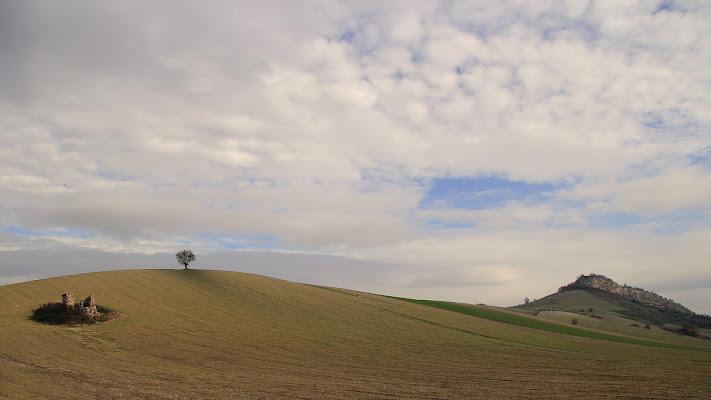 l'albero solitario di rino_savastano