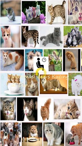 Mengenali Jenis Kucing