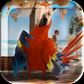 Macaw Parrot Live Wallpaper