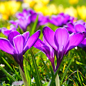 Beautiful Spring Flowers Live Wallpaper icon