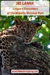 Leopard Encounters at the Wilpattu National Park, Sri Lanka