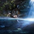 Swimming Pond Live Wallpaper icon