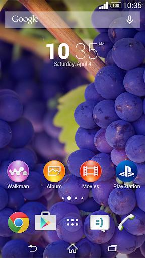テーマ 葡萄
